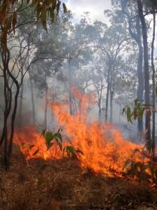 bushfire-1370757