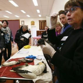 Seabird workshop a success