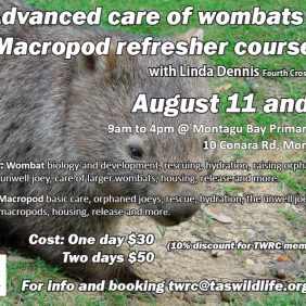 Next course announced … wombats
