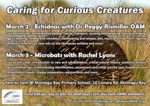 Caring for Curious Creatures workshops @ Montagu Bay Primary School
